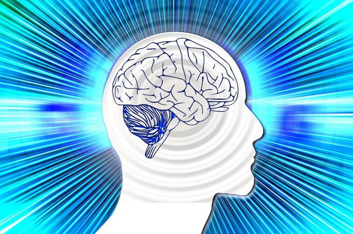 脳を働かす