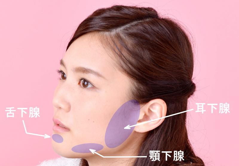 舌下腺、顎下腺、耳下腺の場所