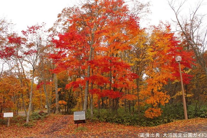 大沼国定公園の紅葉