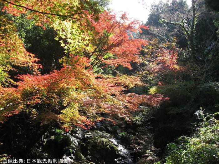 春日渓谷の紅葉