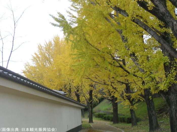 熊本城の紅葉