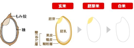 収穫米→玄米→胚芽米→白米