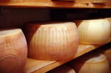 熟成中のチーズ