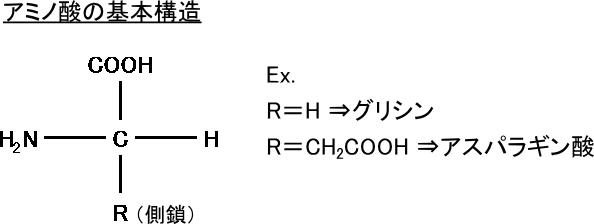 アミノ酸の基本構造
