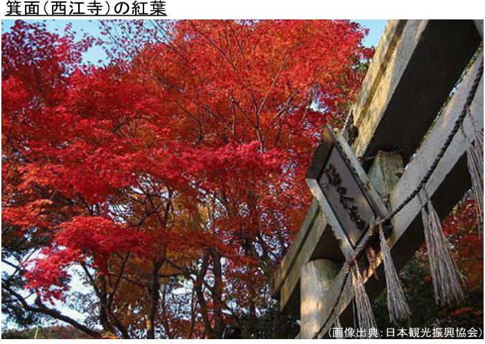 宇治(三室戸寺)の紅葉